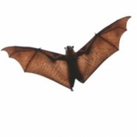 pest control Spokane bats