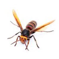 pest control Spokane